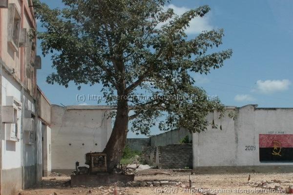 Bulldozer com árvore no meio