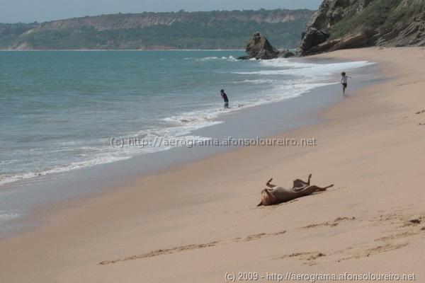 Cão a rebolar-se na areia de Cabo Ledo