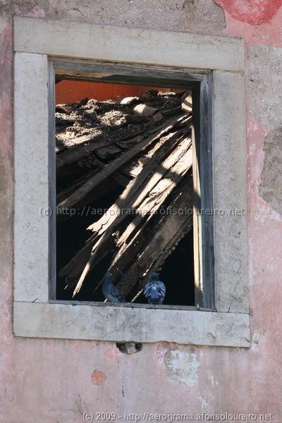 Dois pombos à janela