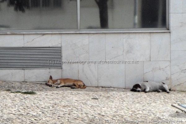 Cães a dormir num dia quente