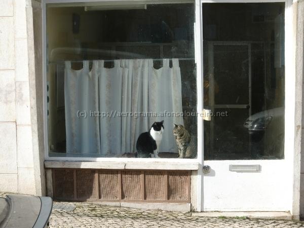 Montra vazia com dois gatos ao Sol